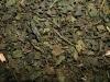 Brennesselblätter